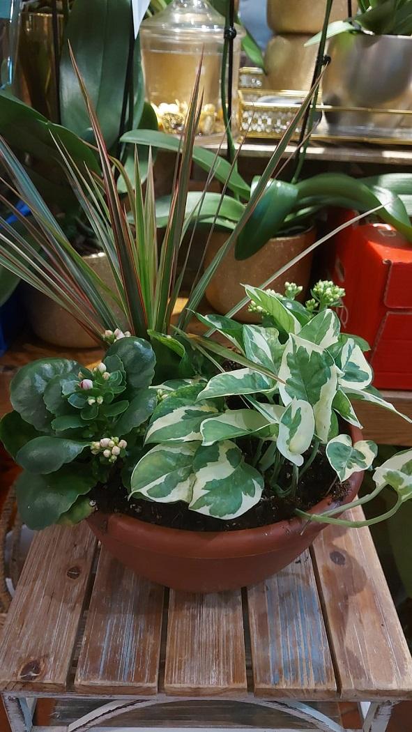 קוקטיל 4 צמחים